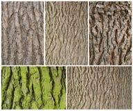 Drewna barkentyny tekstura Obraz Stock