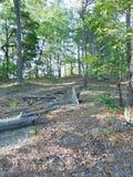 Drewna Ciężcy Zdjęcie Stock