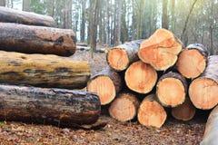 Drewna cięcie loguje się rząd Lasowa odprawa zdjęcie royalty free