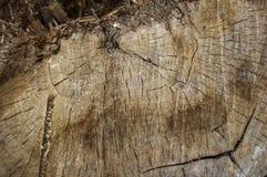 Drewna cięcie tworzyć Obraz Stock