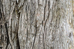 Drewna ściany tekstura Obrazy Royalty Free