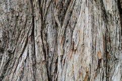 Drewna ściany tekstura Fotografia Stock
