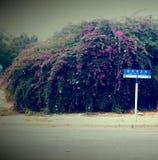 Drewna drogowi Zdjęcie Royalty Free