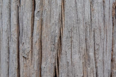 Drewna gnicie Obrazy Stock