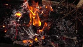 Drewna i węgla ogienia oparzenie zdjęcie wideo