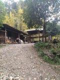 Drewna, kabiny w górach zdjęcia royalty free