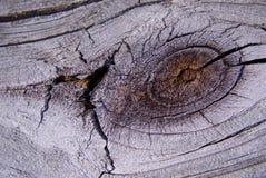 Drewna ogrodzenia kępka Obraz Stock