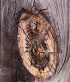 Drewna ogrodzenia kępka zdjęcia royalty free