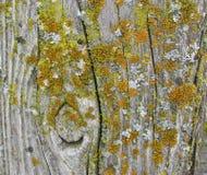 Drewna ogrodzenia poczta Z mech Obraz Royalty Free