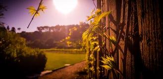 Drewna ogrodzenie z roślinami na wina gospodarstwie rolnym zdjęcie stock