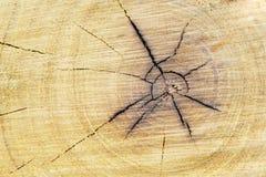 Drewna rżnięty tło Tekstura drzewny fiszorek Sekcja bagażnik z rocznymi pierścionkami obraz stock