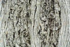 Drewna tła Deskowa tekstura Zdjęcie Stock