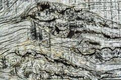 Drewna tła Deskowa tekstura Obrazy Stock