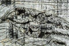 Drewna tła Deskowa tekstura Fotografia Royalty Free