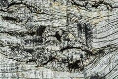 Drewna tła Deskowa tekstura Obraz Stock