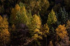 Drewna w średniogórzu, Tybet, Chiny fotografia stock