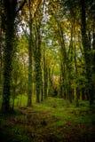 Drewna w San Vittorino Zdjęcie Stock