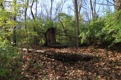 Drewna w spadku Fotografia Stock