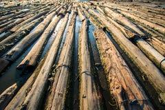 Drewna w wodzie Zdjęcia Royalty Free