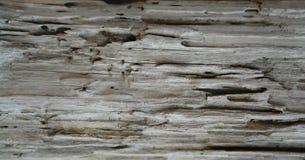Drewna Zbożowy tło Obraz Royalty Free