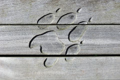 Drewniana łapa zdjęcia stock