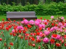 Drewniana ławka w pięknym parku Fotografia Stock