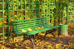Drewniana ławka z spadać żółtymi liśćmi klonowymi na słonecznym dniu Obraz Royalty Free