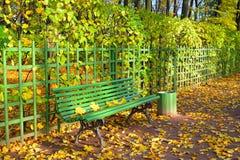 Drewniana ławka z spadać żółtymi liśćmi klonowymi na słonecznym dniu Fotografia Stock