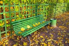 Drewniana ławka z spadać żółtymi liśćmi klonowymi na słonecznym dniu Obrazy Stock