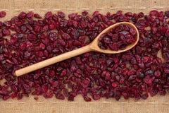Drewniana łyżka z cranberries Zdjęcia Royalty Free