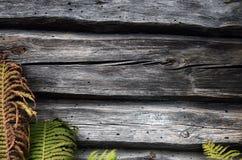 Drewniana ściana zielona trawa Zielonej rośliny stare drewniane deski Zdjęcie Royalty Free