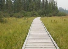 Drewniana ścieżka Zdjęcie Stock
