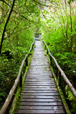 Drewniana ścieżka po target52_0_ przez tropikalnego lasu Obrazy Royalty Free