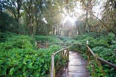 Drewniana ścieżka po target939_0_ przez tropikalnego lasu Obrazy Royalty Free