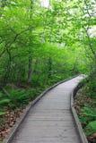 Drewniana ścieżka przez deciduous lasu Fotografia Royalty Free