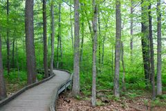 Drewniana ścieżka przez deciduous lasu wygina się z widoku Zdjęcie Stock