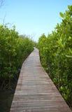 Drewniana ścieżka w tropikalnym parku Fotografia Royalty Free