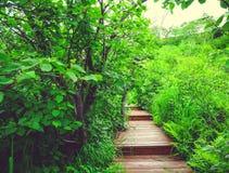 Drewniana ścieżka w Zielonym Lasowym Kamchatka, Rosja Zdjęcia Royalty Free