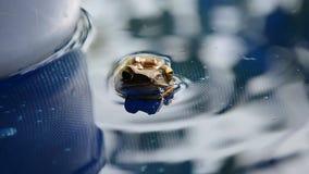 Drewniana żaba unosi się na powierzchni woda zbiory