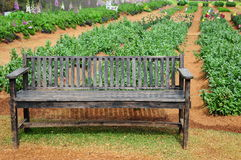 Drewniana ławka na ogródzie Obrazy Royalty Free