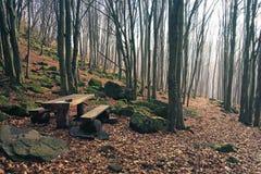 Drewniana ławka w mglistym lesie Zdjęcie Royalty Free