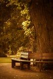 Drewniana ławka w parku Zdjęcia Royalty Free