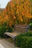 Drewniana ławka w parku obrazy royalty free