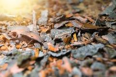 Drewniana barkentyna Zdjęcie Stock