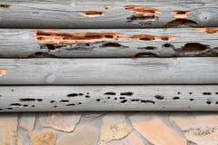 Drewniana Borer szkoda Obraz Stock