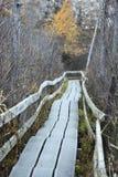 Drewniana Chodząca ścieżka przez lasu Zdjęcie Royalty Free