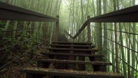 Drewniana ?cie?ka przez mglistego bambus zieleni lasu w Alishan Wycieczkuje teren, Ruitai Historyczny ?lad w Tajwan zbiory