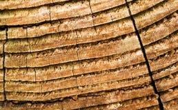 drewniana deska Obraz Royalty Free