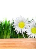 Drewniana deska, trawa i kwiaty Zdjęcie Stock