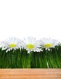 Drewniana deska, trawa i kwiaty Zdjęcia Stock